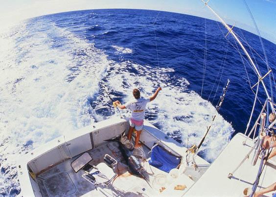 Louisiana deep sea fishing 702 551 4376 man fishing for Deep sea fishing louisiana
