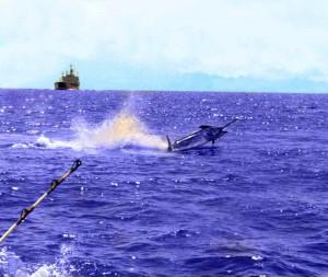 Venice louisiana offshore deep fishing charterscaptains for Deep sea fishing la